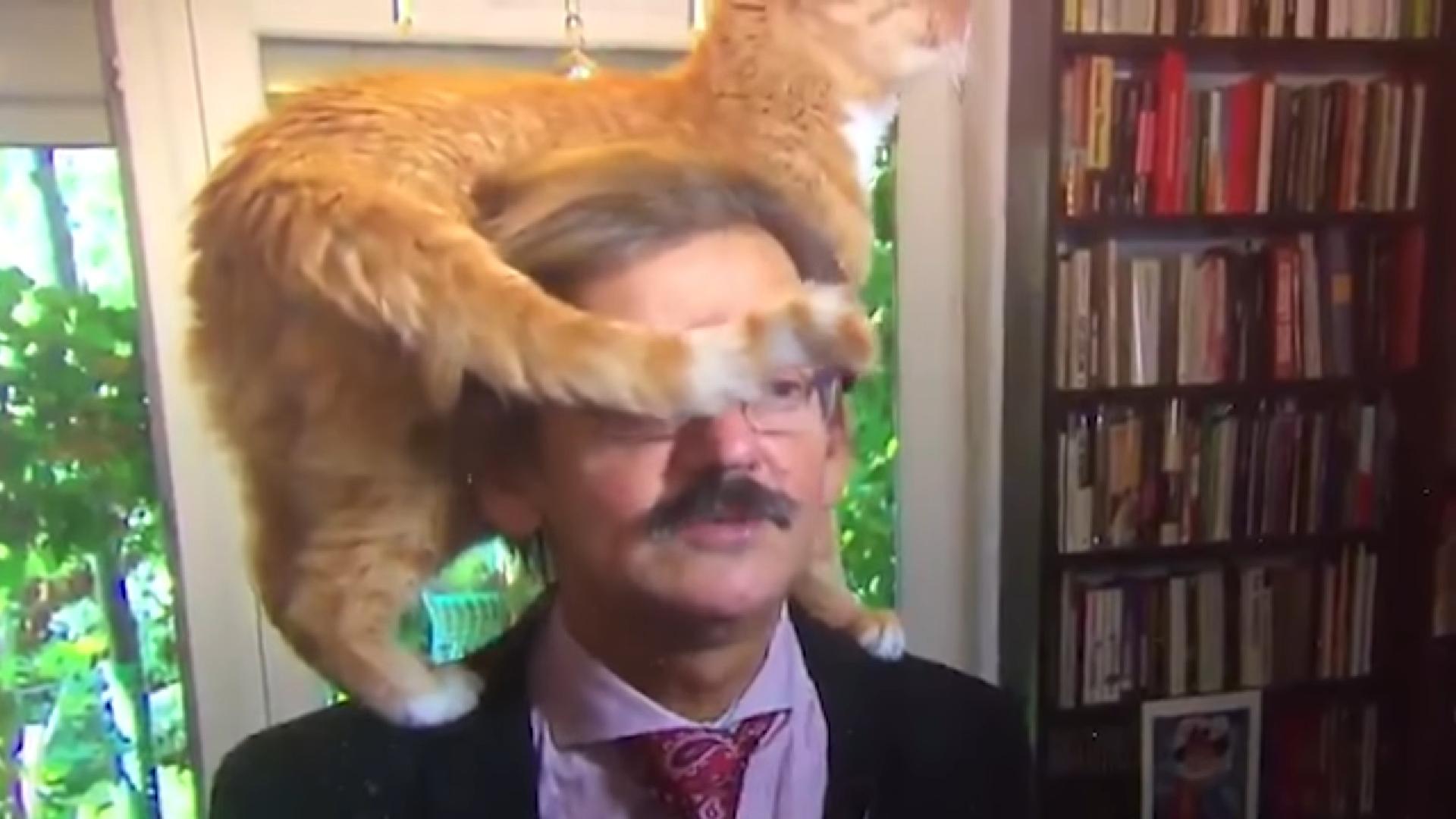 Viralul zilei: Când pisica are mai multă notorietate decât tine