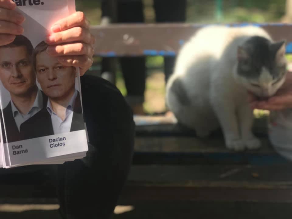 Lupta electorală se duce prin poze cu bebeluși și pisici. De ce nu sunt întâmplătoare fotografiile cu politicieni, copii și animale