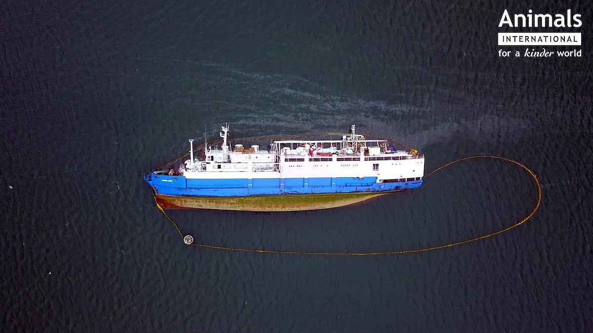 Tragedia din portul Midia, în atenția presei internaționale. Ce spun publicațiile străine despre condițiile în care sunt transportate animalele