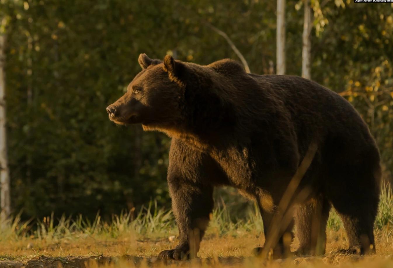 """O asociație de vânători cere CNA să sancționeze """"toate posturile TV, de radio, presa liberă și on-line"""""""